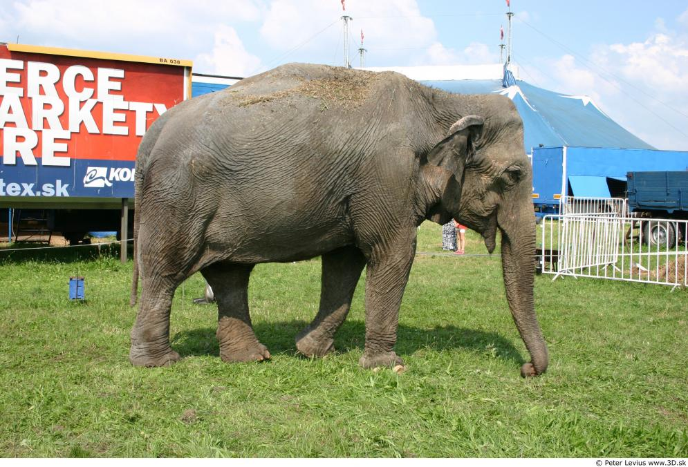 Image from Elephant - Animal photo references from 3D.sk - 76743elephant_0002.jpg