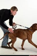 Image from Dog playing and attacking - 70282009_07_dog_rr_action_05.jpg