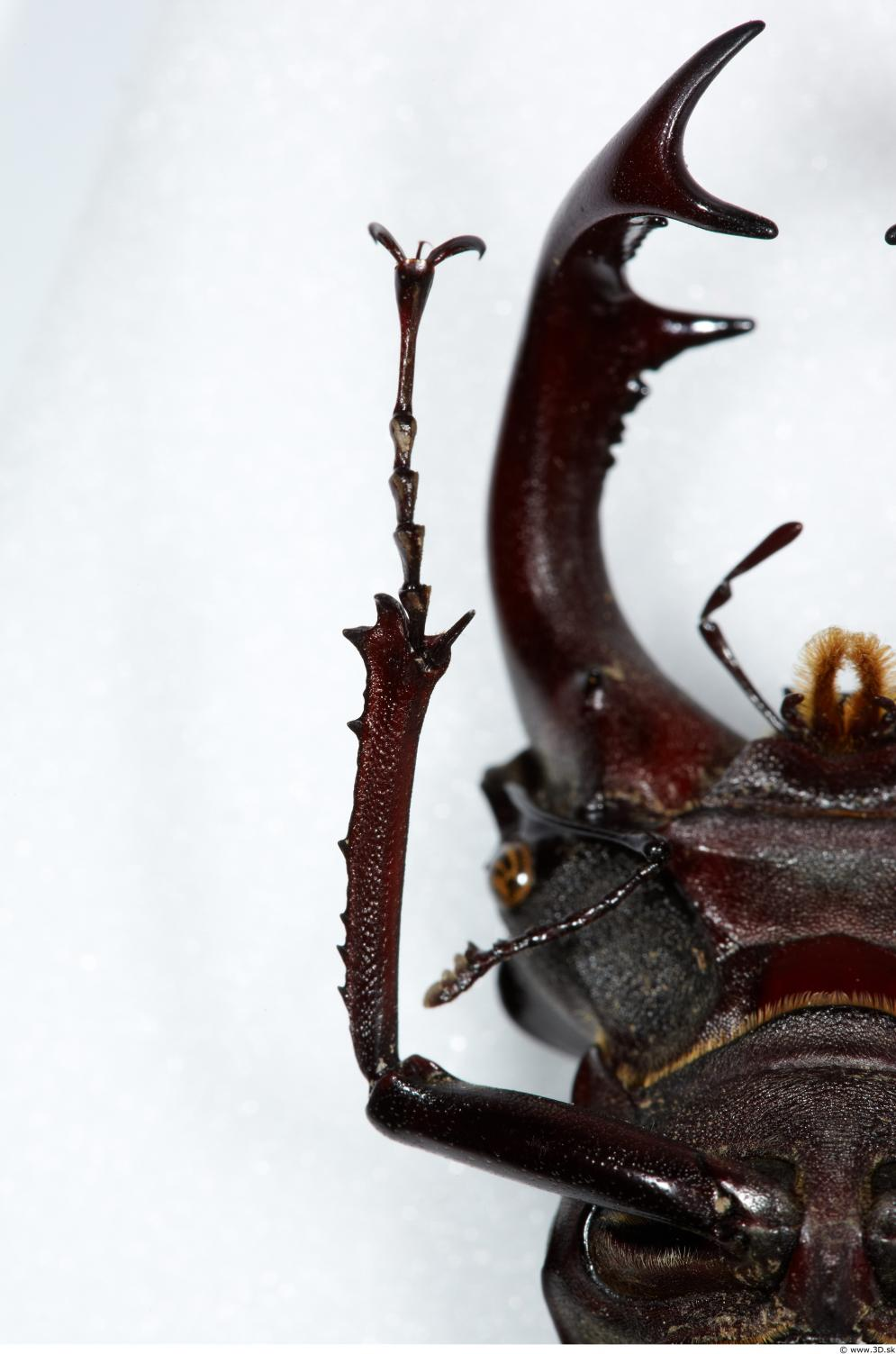 Image from Beetles - Animal photo references from 3D.sk - 401313beetles_0001_0033.jpg