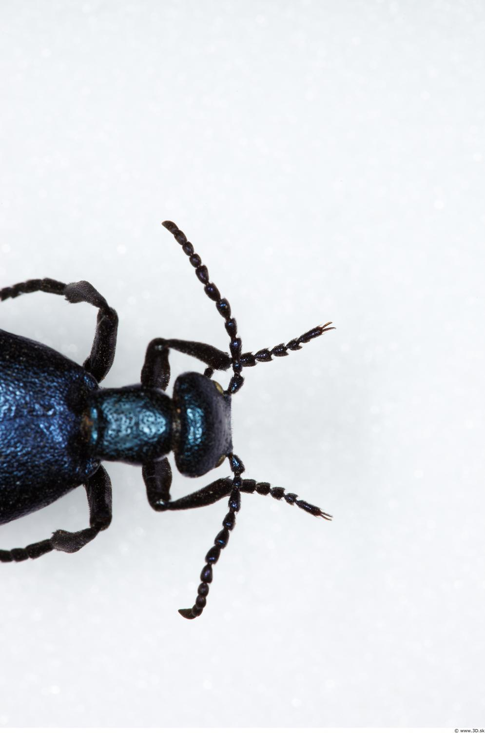 Image from Beetles - Animal photo references from 3D.sk - 401345beetles_0001_0043.jpg