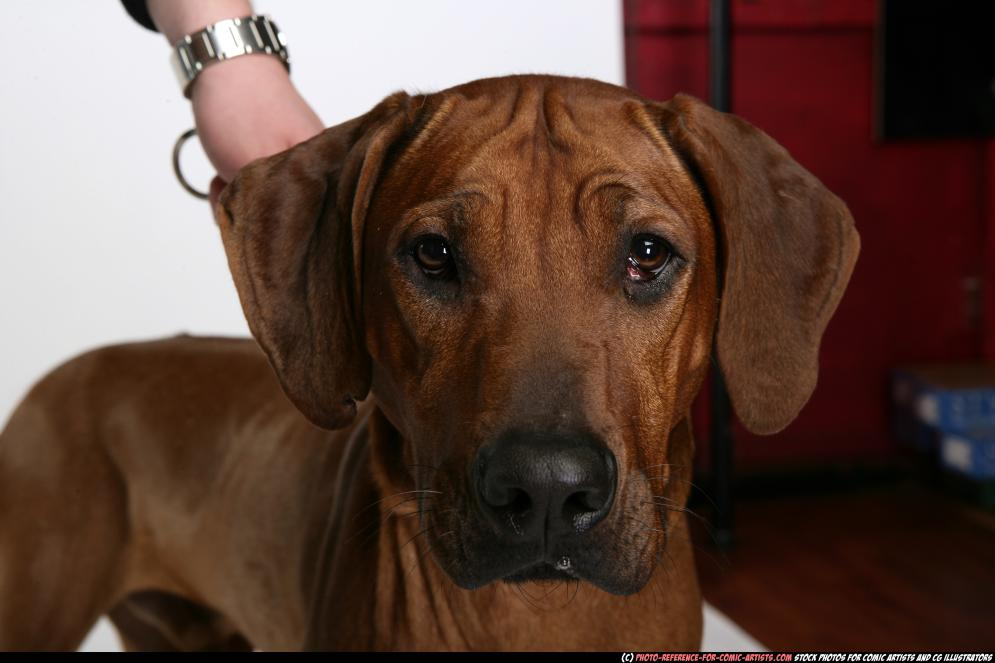 Image from Dog playing and attacking - 55602009_03_dog_rr_misc_12.jpg
